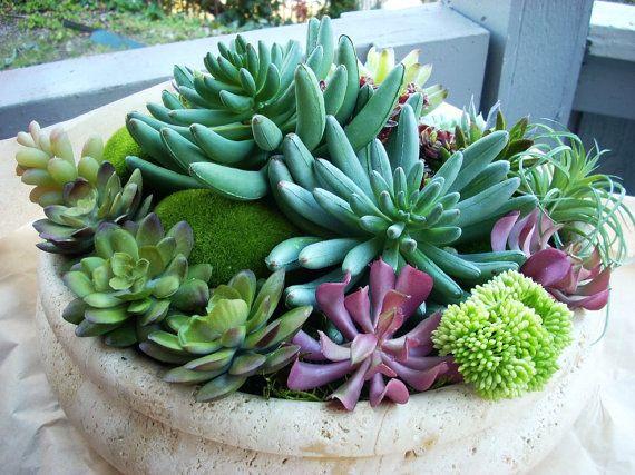 Faux Succulent Indoor Garden Artificial Cactus Garden Modern