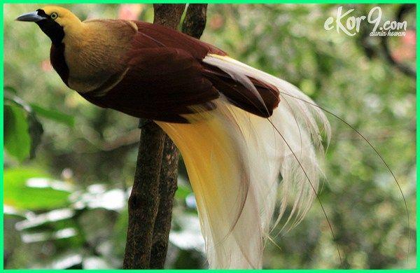 Hewan Langka Di Indonesia Cara Pelestarian Dan Suaka Margasatwanya Dunia Fauna Hewan Binatang Tumbuhan Hewan Langka Hewan Binatang