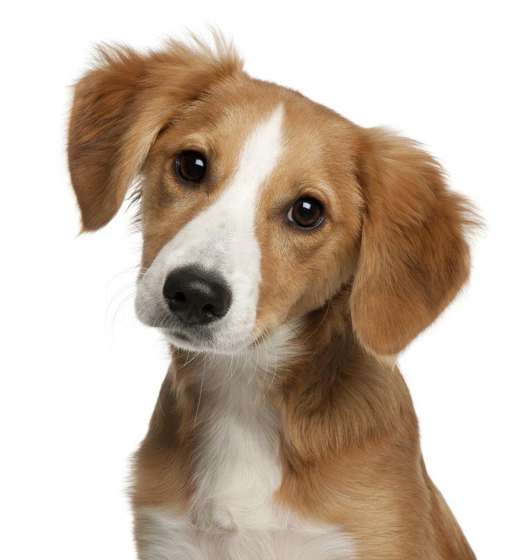 Comparateur de mutuelle pour chien. Le chien fait partie des animaux favoris des français. Cependant, le chien engendre souvent différents frais et coûts, notamment chez le vétérinaire. Il existe de nombreuses assurances pour chien proposant différentes prestations afin de le protéger au mieux et de vous éviter tout imprévu pouvant occasionner des frais importants (accidents, hospitalisation). http://www.lecomparateurassurance.com/C-103344-univers-animaux/P-105534-F-1001-chiens-chats