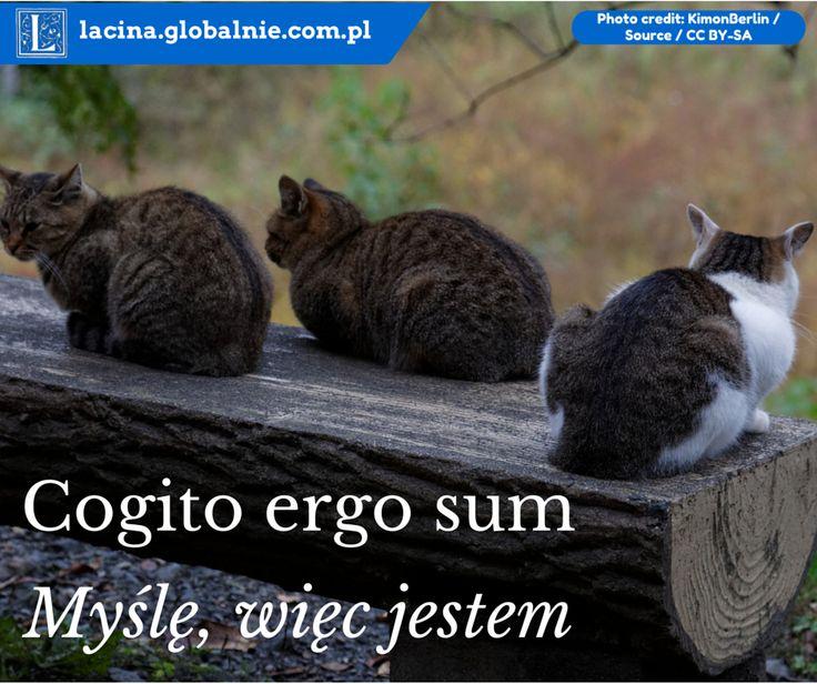 Cogito ergo sum. Sentencje łacińskie. http://lacina.globalnie.com.pl/sentencje-lacinskie/ #łacina #sentencje #cytaty