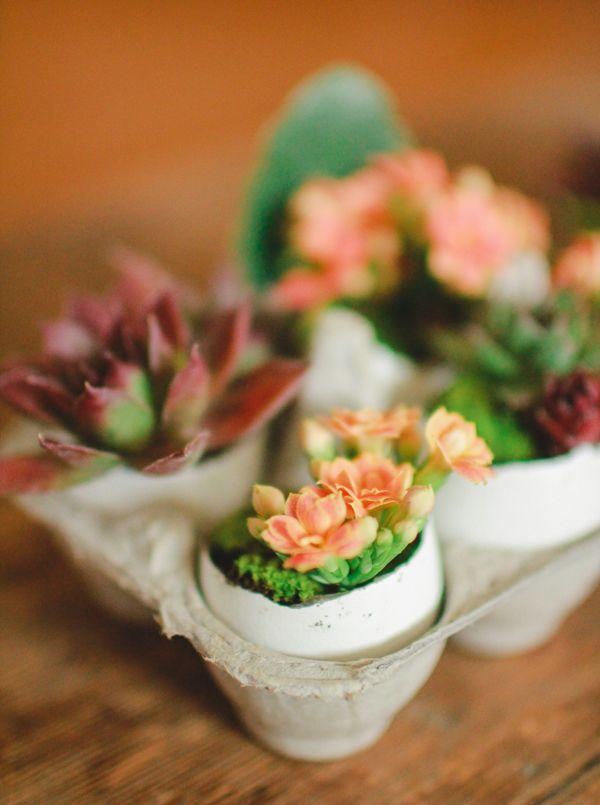 Le Robin's Nest: DIY Eggshell Planters