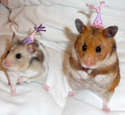 pets in clothes | ... Pets clothing, dresses and sleeping bags to hand out the birthday