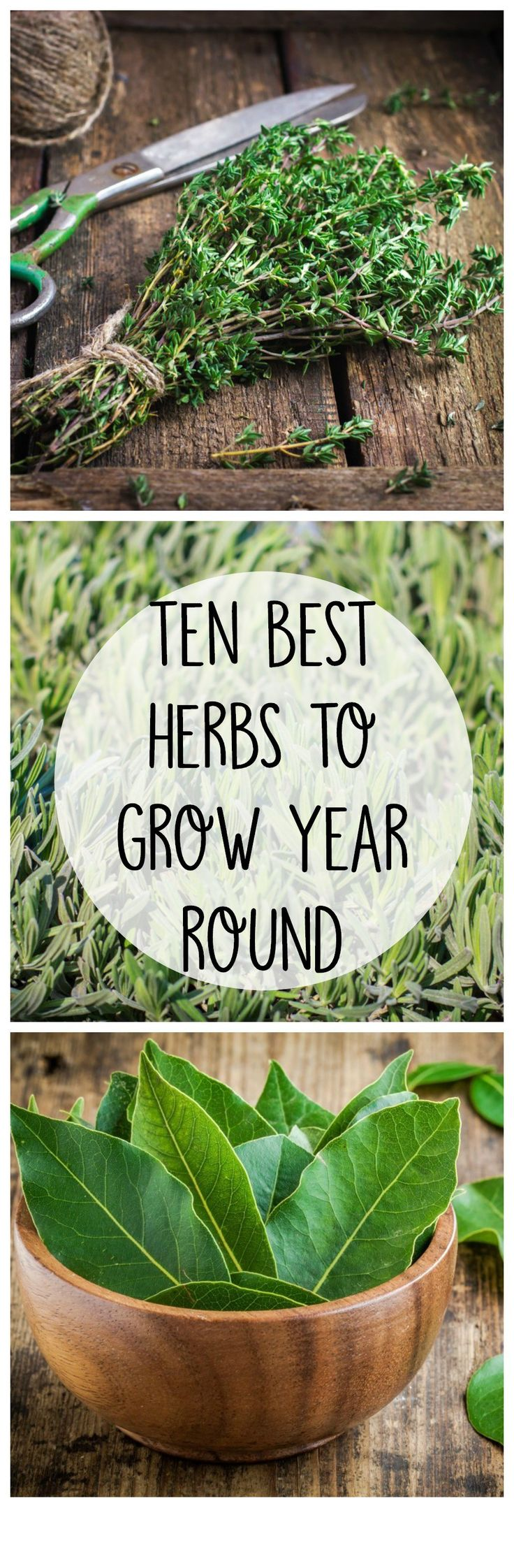 10 Best Herbs To Grow All Year Round. Gardening VegetablesHerb  GardeningIndoor ...