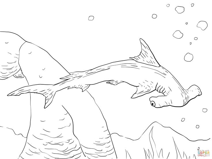 shark coloring pages to print google search