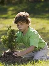A tree a day keeps nature healthy