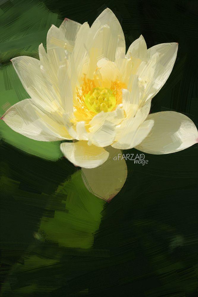 https://flic.kr/p/qsV4eh | Lotus Flower Paintings - Image Based - Akvis Oil Paint Filter  - | Lotus Flower Paintings - Image Based - Akvis Oil Paint Filter - akvis.com/en/oilpaint/index.php DD0A3003-ls5-1000