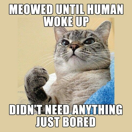 Meowed until human woke up.  Didn't need anything just bored.
