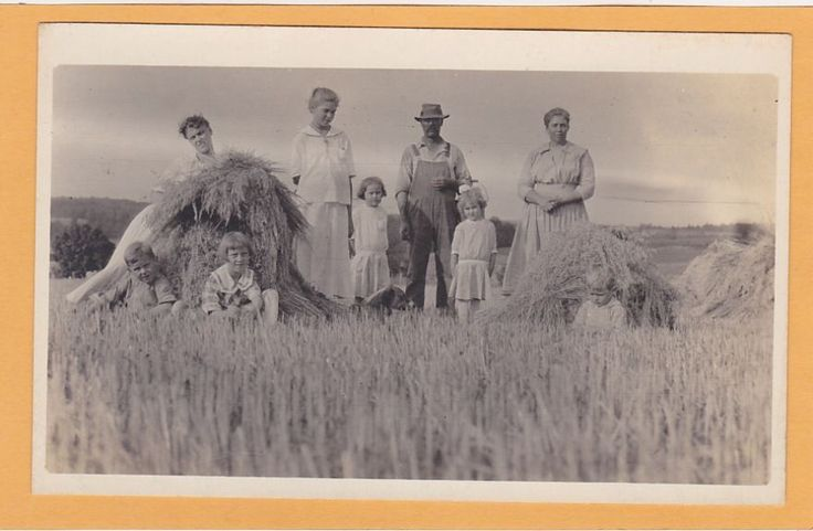 Real Photo Postcard RPPC - Family Harvesting Wheat - Wheat Field in Collectibles, Postcards, Real Photo   eBay