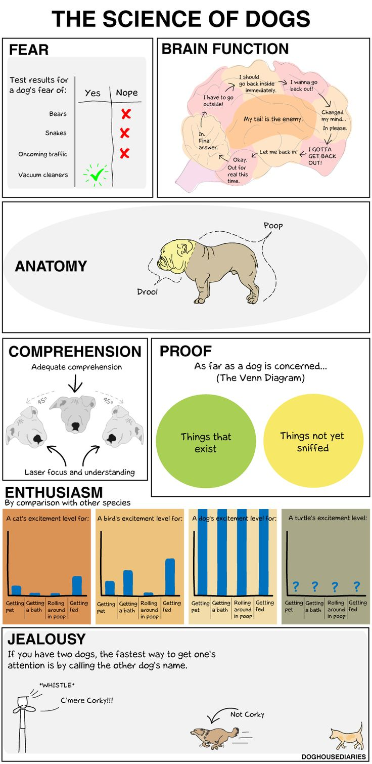 """Not so scientific """"Science of Dogs"""" INFOGRAPHIC #funny  #dogs"""