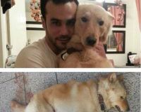 Justice for Whiskey: Dog shot 12 times on Beirut Corniche - The Petition Site