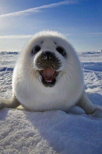 We wish we were as happy as this in the cold!