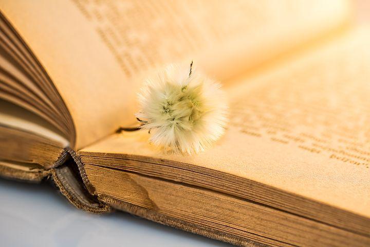 Mindannyian,+akik+élünk,+ide+születtünk,+olyanok+vagyunk,+mint+egy+könyv.+Képzeljük+el+azt+a+helyet,+ahonnan+a+küldetésünk+indul.+Állunk,+várunk,+nézelődünk+és+a+hónunk+alatt+szorongatunk+egy+könyvet.+Ennek+a+könyvnek+akkor+csak+a+címe+létezik,+rajta+van+a+nevünk+és+földi+létezésünk+kezdetének…