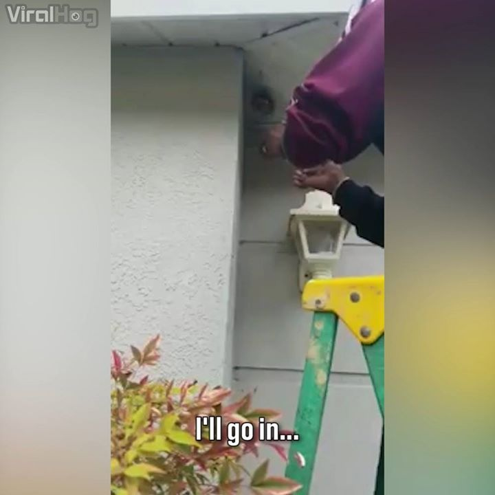 Killing wasps the old-fashioned way