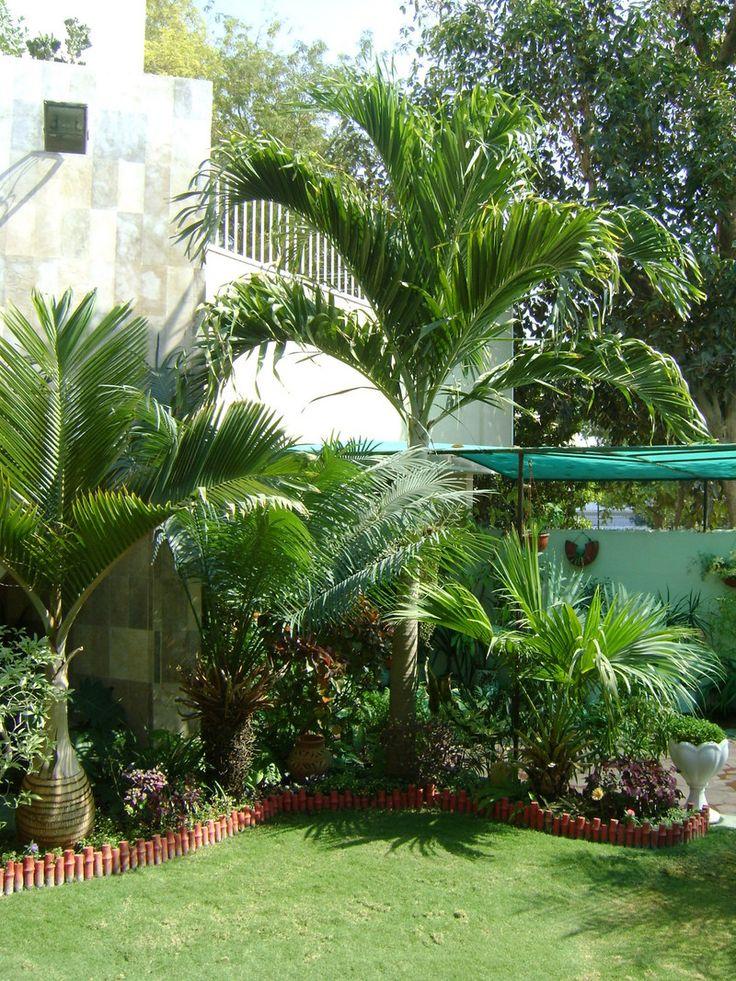 Best 25 tropical backyard landscaping ideas on pinterest for Small garden trees 50