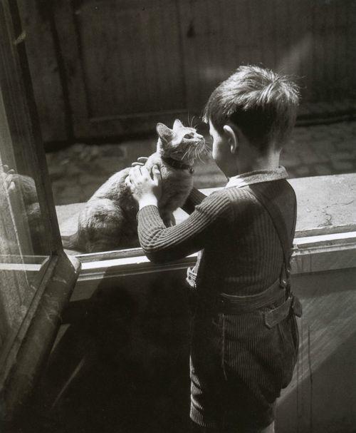 Willy Ronis - Le chat de la concierge  Paris, 1947  FromParis entre chats: Willy Ronis, Cat Art, Willis Ronis, Art Prints, Le Chat, Paris 1947, Chat De, Cat Kids, Caretak Cat