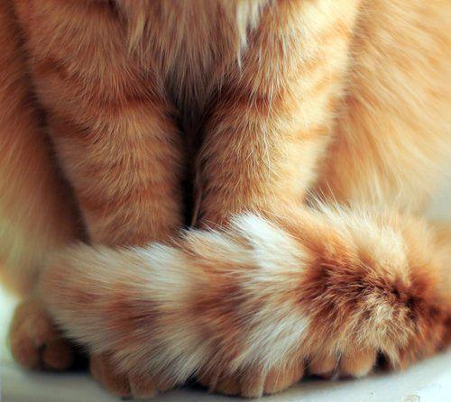orange fluffy kitties are the best
