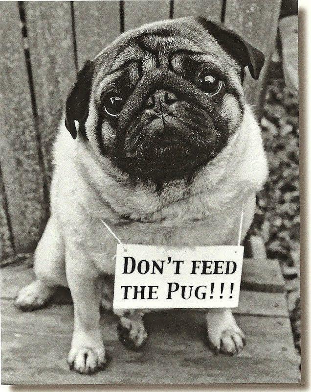 Hahahaha!: Animals, Dogs, Pug Life, Pet, Pugs, Friend