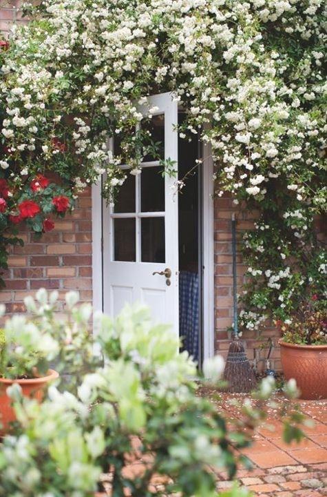 just beautiful: The Doors, Back Doors, Dreams, Climbing Rose, Banks Rose, Doors Frames, Backyard, Flower, Pretty Doorway