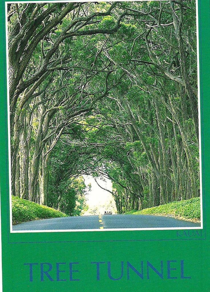 Tree Tunnel Kauai, on way to Koloa and Poipu........1991 before Hurricane Iniki in '92.