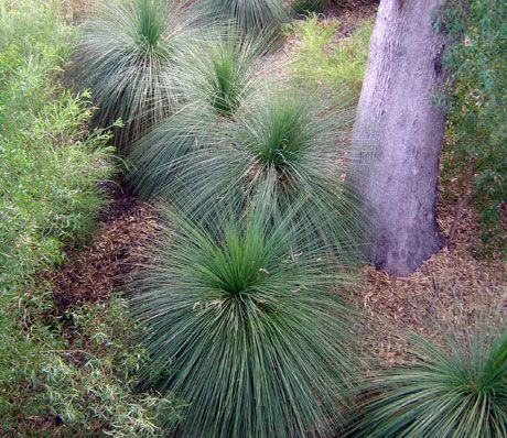 Grass Trees and Plants