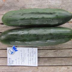 Vegetables - Hawthorn Farm Organic Seeds