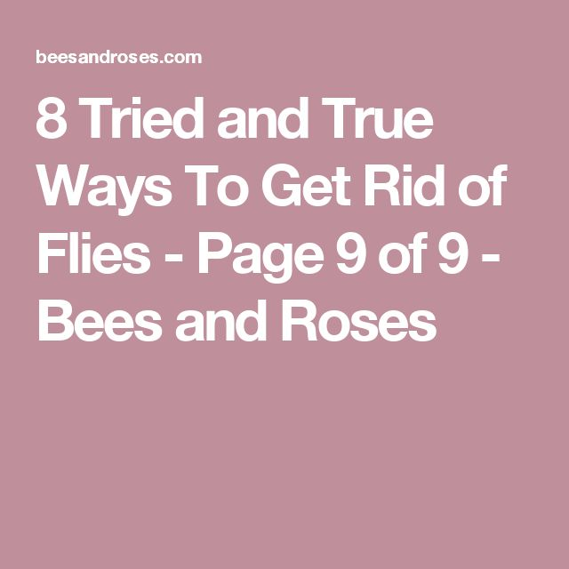 8 Tried and True Ways To Get Rid of Flies - Page 9 of 9 - Bees and Roses