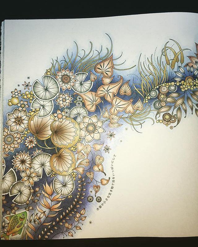 728 Best Coloring Johanna Basford