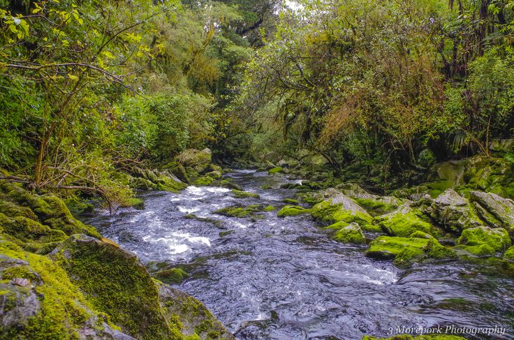 The Riwaka River emerges from an underground cave before flowing through the wooded valley and entering the sea. Riwaka is in the top of the South Island of New Zealand.
