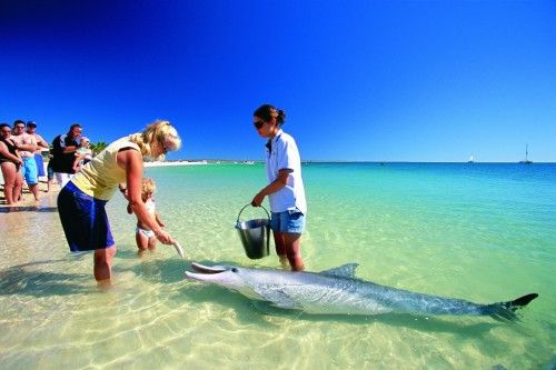 Meet the dolphins at Tangalooma, Moreton Island near the Gold Coast and Brisbane, Queensland, Australia.