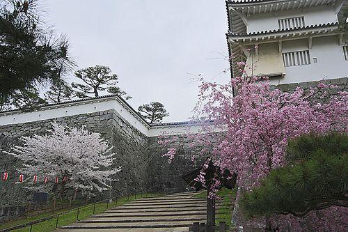 霞ヶ城の桜