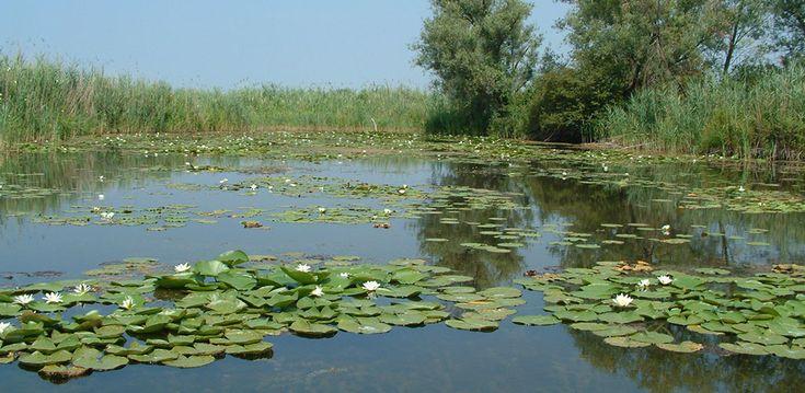 La palude rappresenta il ristagno di acqua che può formarsi dove il suolo è pianeggiante e un po' depresso rispetto alle regioni vicine, o dove la sua...
