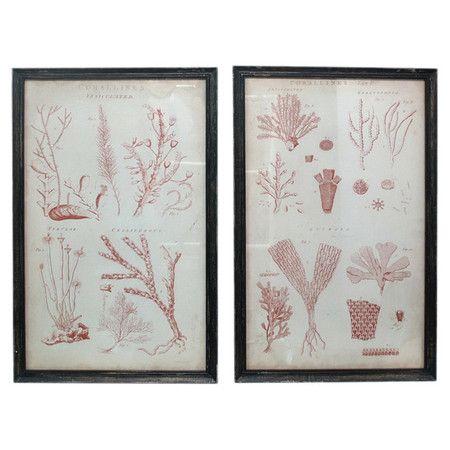 lovely: Decor, Sea Plants, Focal Points, Art, Plants Framed, Eye Catching Framed, Print Showcases, Framed Prints