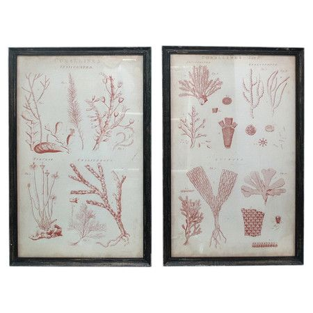 lovely: Wall Art, Art Sets, Sea Plants, Corallin Frames, Focal Point, Frames Printsconstruct, Prints Sets, Plants Frames, Prints Showca