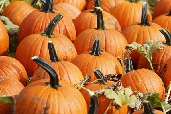 10 places to go pumpkin picking in New Jersey | NJ.com