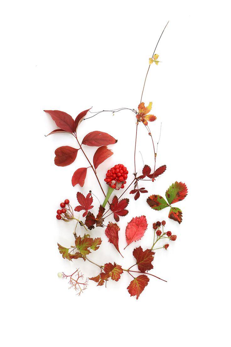 hints of autumn (mary jo hoffman)