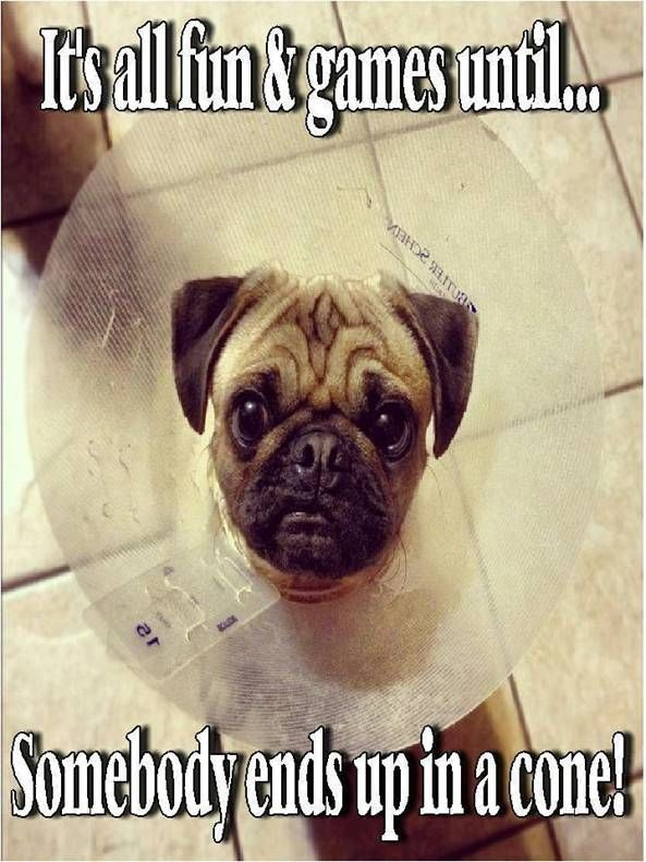Absurd Dog Training Memes Dogsgoingtocollege Dogstuffproducts