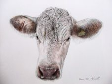 I am a Portrait Artist living in the beautiful county of Pembrokeshire, on the West Wales Coast. I specialise in producing meticulously hand drawn pet, animal and family portraits, I endeavour to give lifelike and long lasting memories to every client.  My primary medium is Watercolour Pencil, I prefer this as it is subtle enough for the most delicate shading yet tough enough to cope with the darkest areas of a portrait.