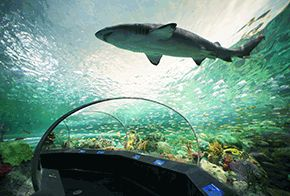 Ripley's Aquarium of Canada in Toronto is a home to over 15,000 fish and other water-loving animals.