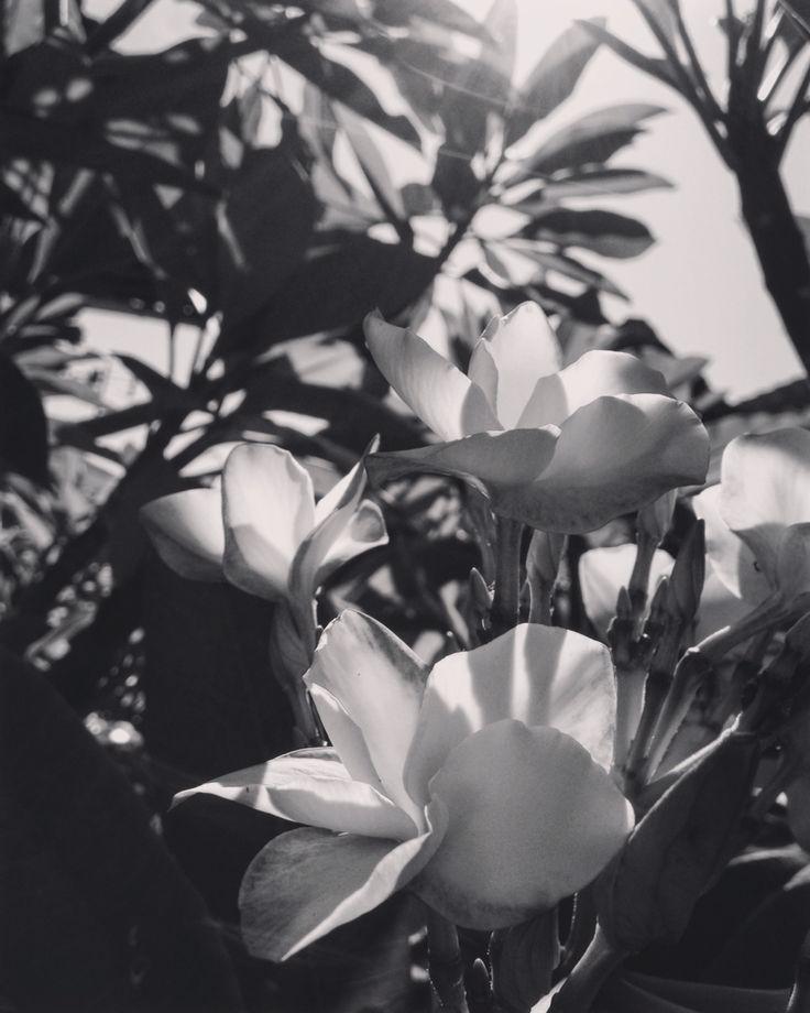 Black and white morning in nyepi day