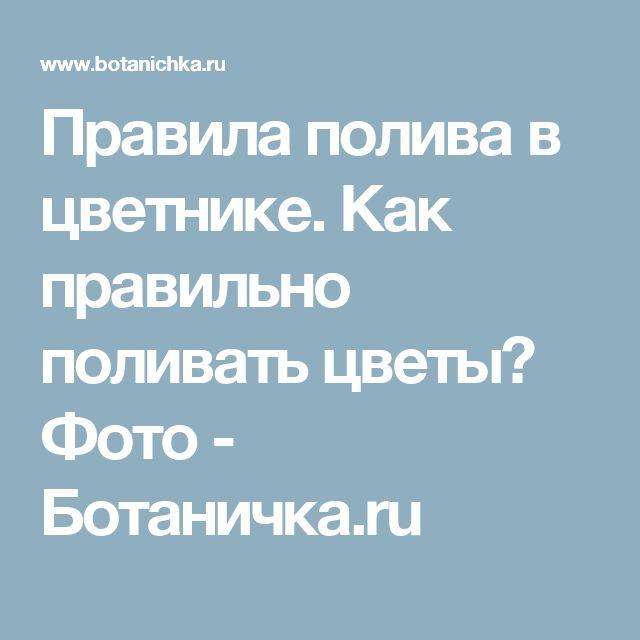 Правила полива в цветнике. Как правильно поливать цветы? Фото - Ботаничка.ru