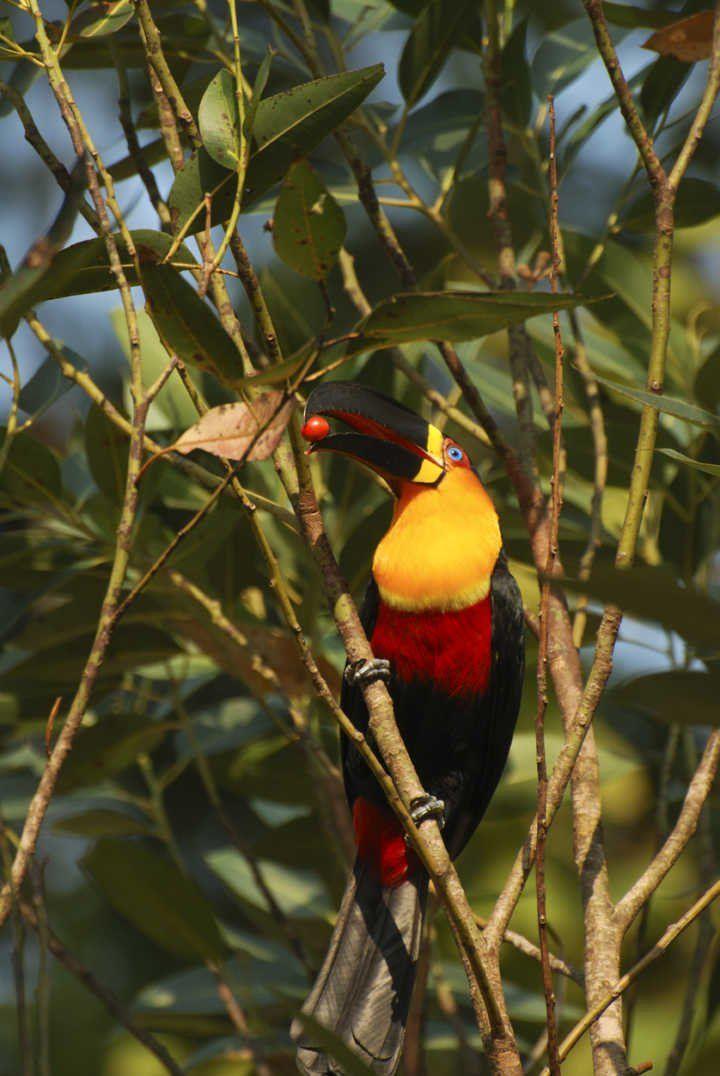 5 destinos brasileiros ideais para observação de pássaros
