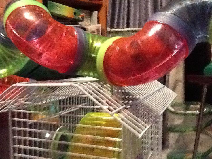 Hammy's cage tube