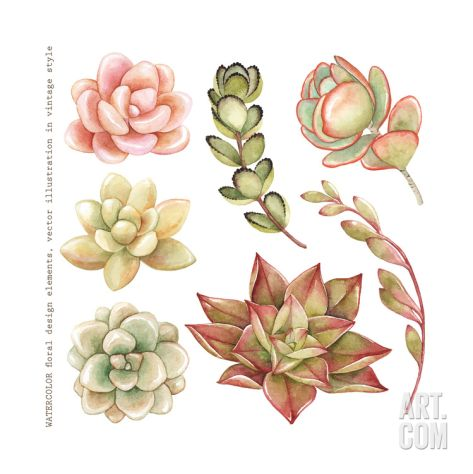 Watercolor Collection of Succulents and Kalanchoe for Your Design, Hand-Drawn Illustration. Art Print by Nikiparonak at Art.com