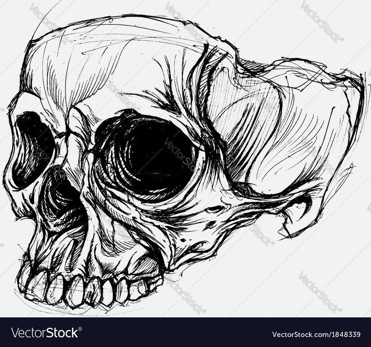 Skull Drawing vector image on Skull drawing, Drawings, Skull