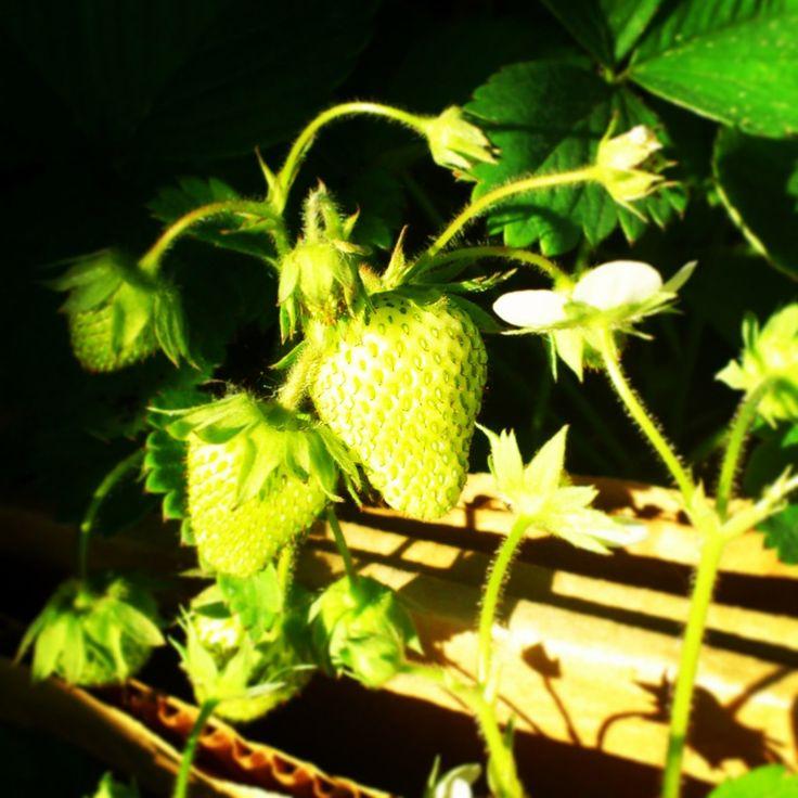 Strawberry - 06/01/13 http://vk.com/club12680729
