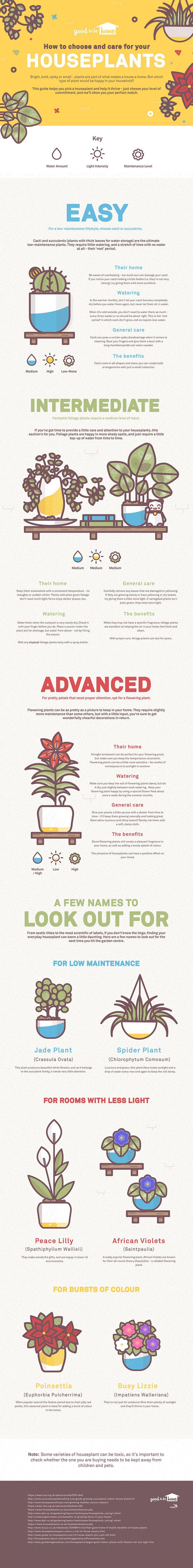 Anglian's Guide to Keeping Houseplants