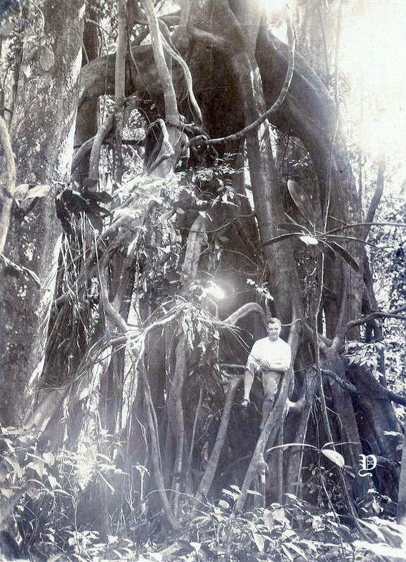 Potret Pria Eropa Di Pohon Beringin Nederlands Indie Sekitar 1925 Dengan Gambar Sejarah Indonesia Eropa