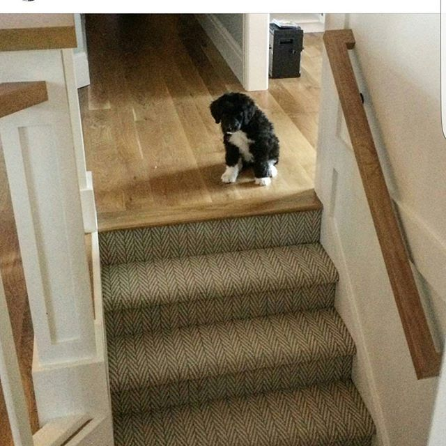 17 Best Images About Pet Friendly Flooring On Pinterest: 17 Best Images About Doggies And Rugs On Pinterest