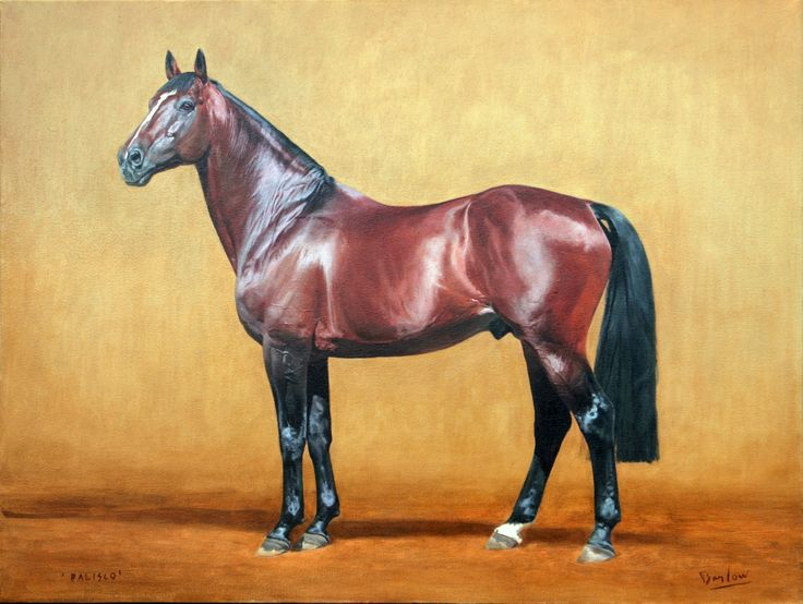 Palisco Oil on canvas. Warmblood stallion owned by Anthea Erasmus, Cape Town, SA