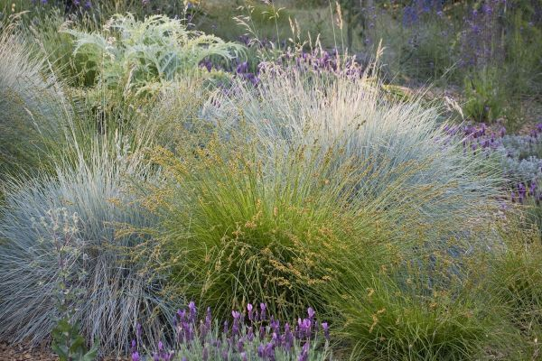 Greenlee & Associates   lavender and grasses. love the purples, blues and greens.